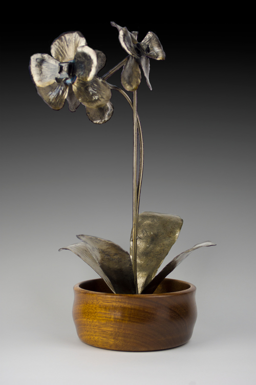 Wolsing Orchid in Wenge Bowl