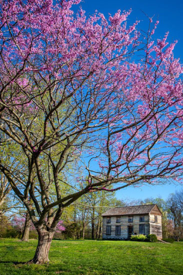 photography-john-locus-springtime-at-the-old-homestead-midwest-salute